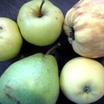 Pommes, poires et coings